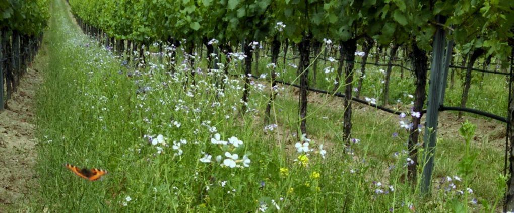 Biodiversität im Weingarten