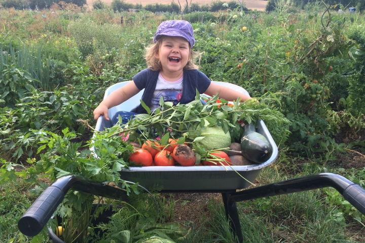 Glückliches Kind sitzt in einer SCheibtruhe voll frisch geernteten Gemüse