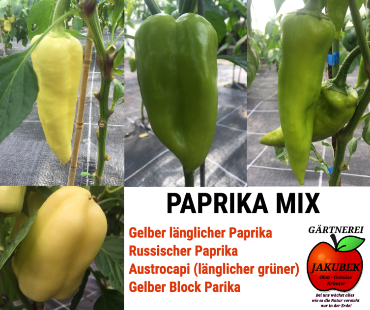 Paprika Mix Gärtnerei Jakubek