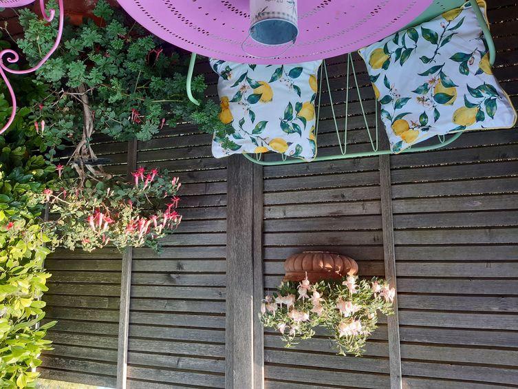 Fuchsien im Garten