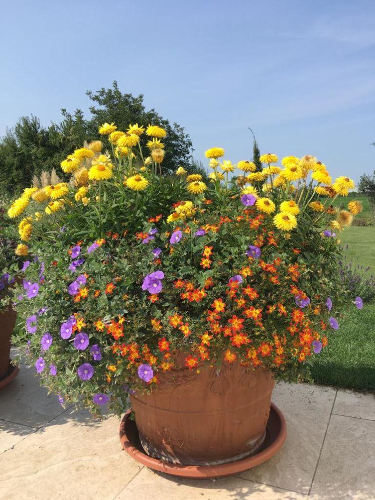 Bunter Sommertopf in Gelb, Orange, Lila