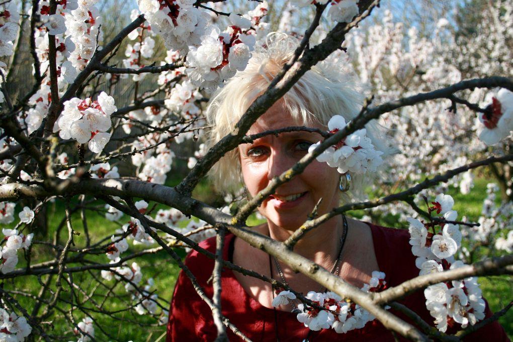 Regina Jakubek - Marillenbäume in der Blüte