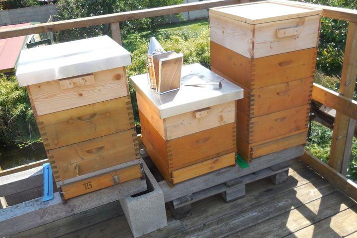 Bienenstöcke und imkerliches Werkzeug