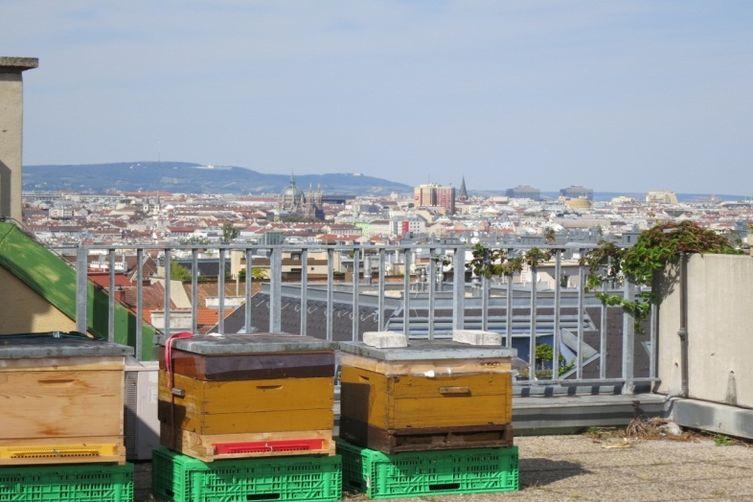 Unsere Bienen in Meidling