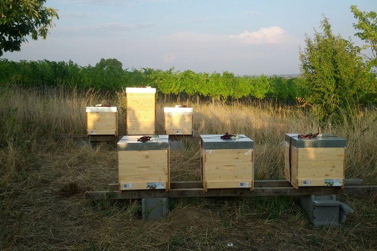 Die Bienen am Bisamberg in den Gabrissen