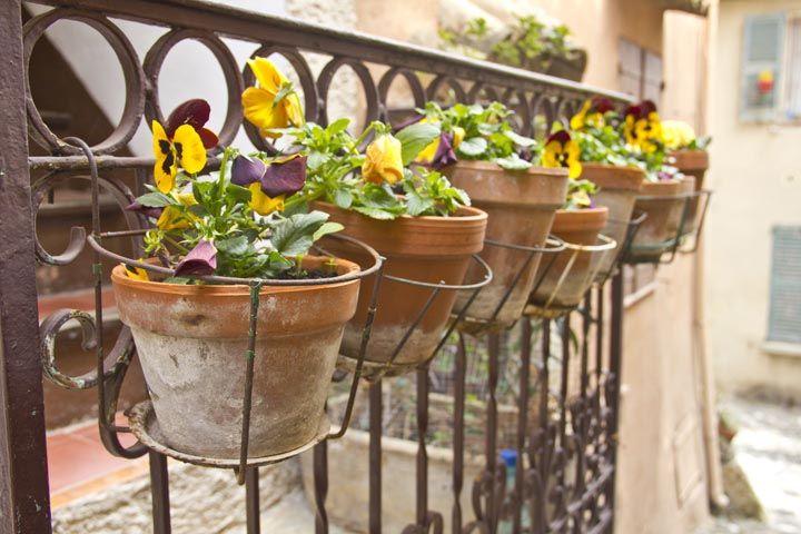 Beet-, Terrassen- und Balkonpflanzen