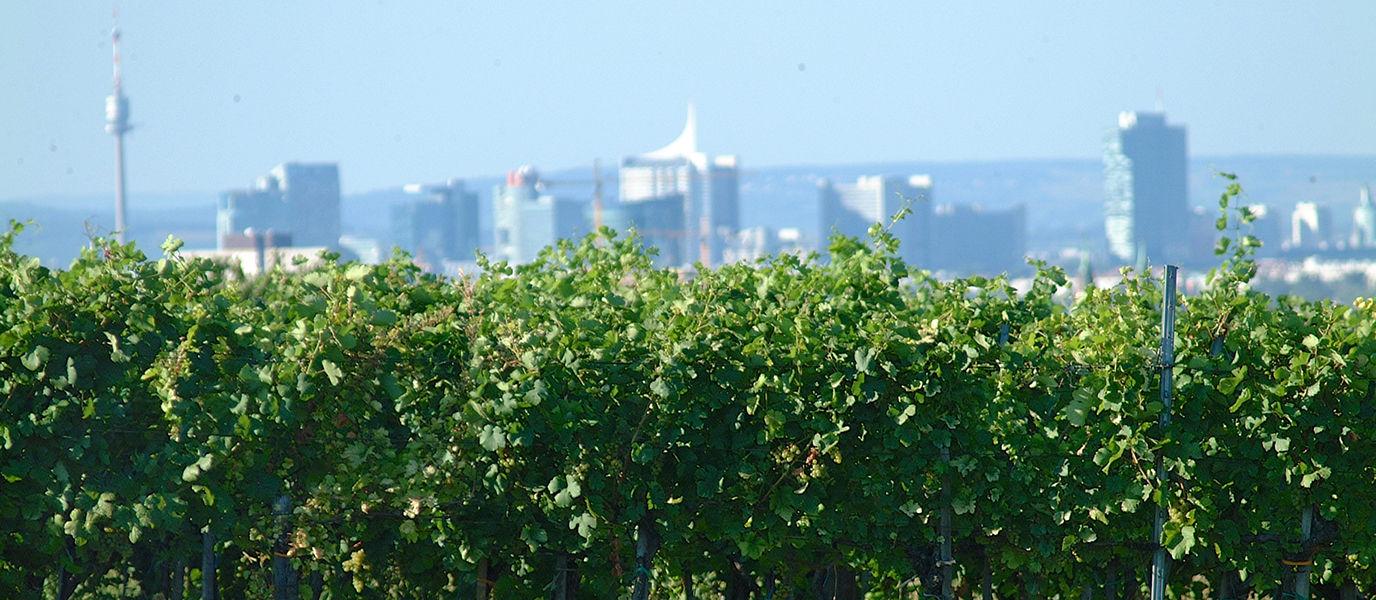 Weingarten Oberlaa